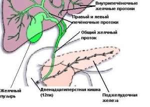 Факультетская Хирургия Учебник Савельева