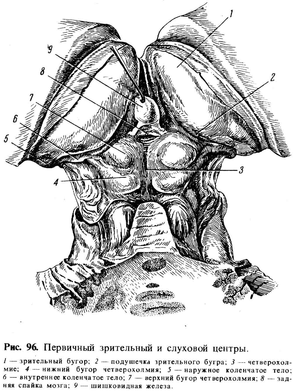 Капсула слуховая фото