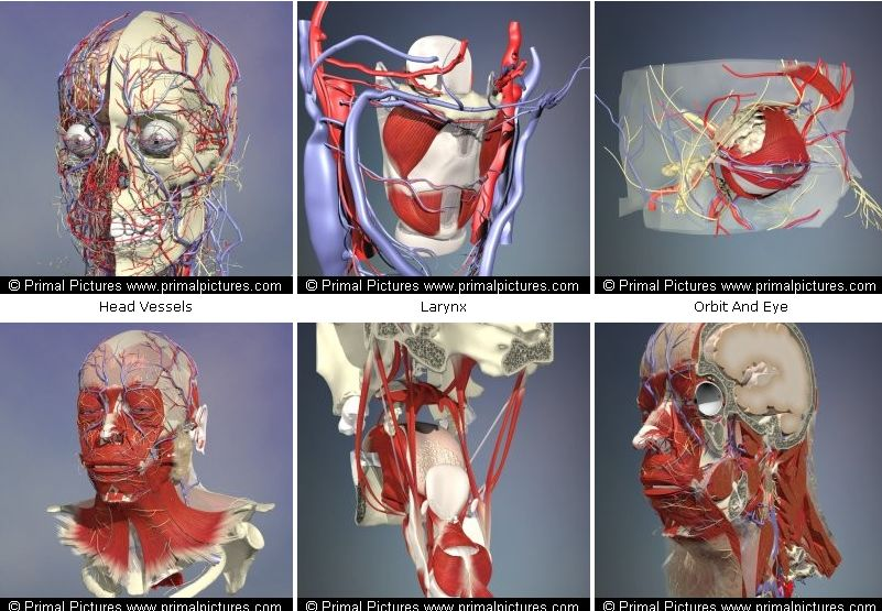 3d атлас анатомии человека онлайн